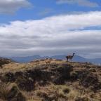 16. Puerto Rio Tranquilo to Park Patagonia