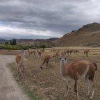 17. Parque National Patagonia